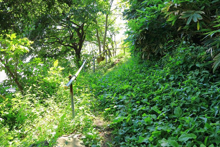 恵美須神社の草が生えた参道