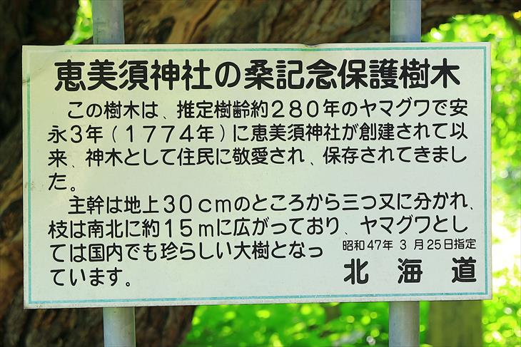 恵美須神社の桑記念保護樹木の説明板
