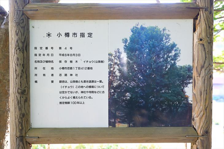 忍路神社の小樽市指定保存樹