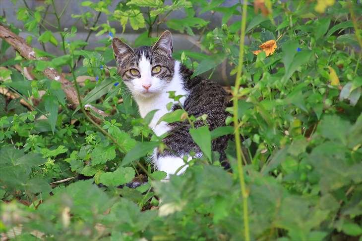 小樽 天満宮の猫
