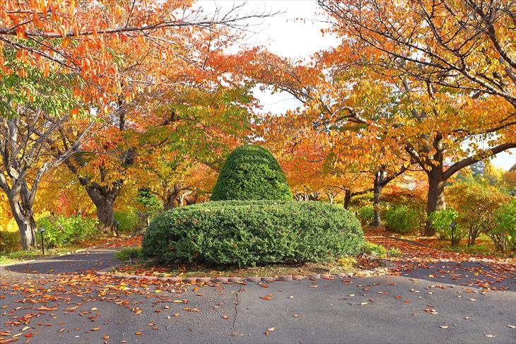 手稲公園の紅葉