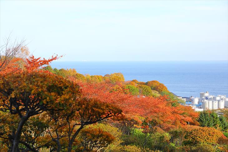 手宮公園の紅葉と海
